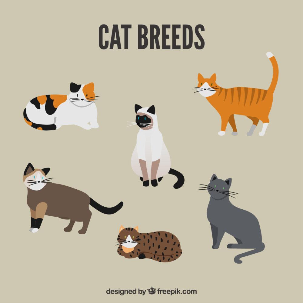 ペット関連の副業画像