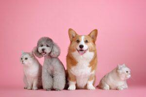 ペット関連の副業について